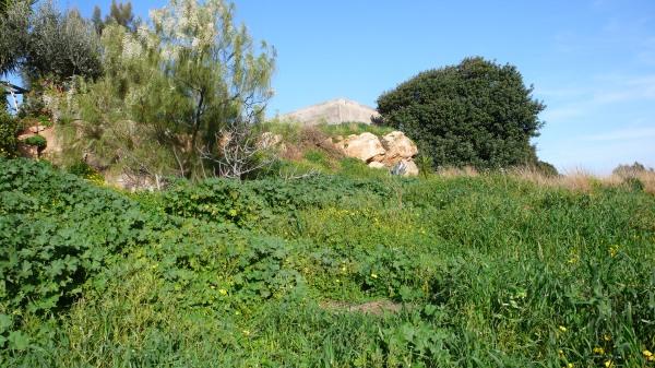 En hiver, le genêt blanc à gauche, la citerne communale et le caroubier à droite.