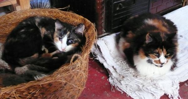 Zoé et Pissette