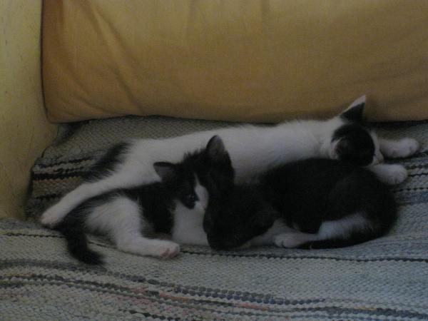 Teddy, Mélissa et Kéti.