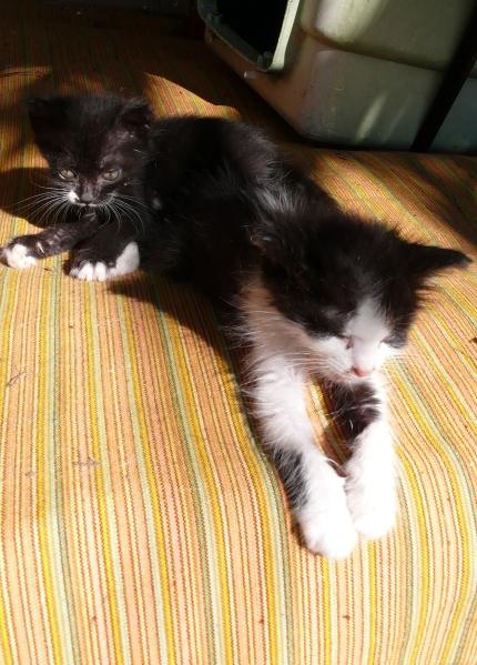 Primus, en arrière et sa petite soeur.