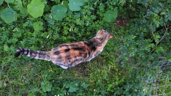Zéfira, la seule chatte en tartan !
