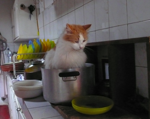 Les chats AIMENT cette casserole.