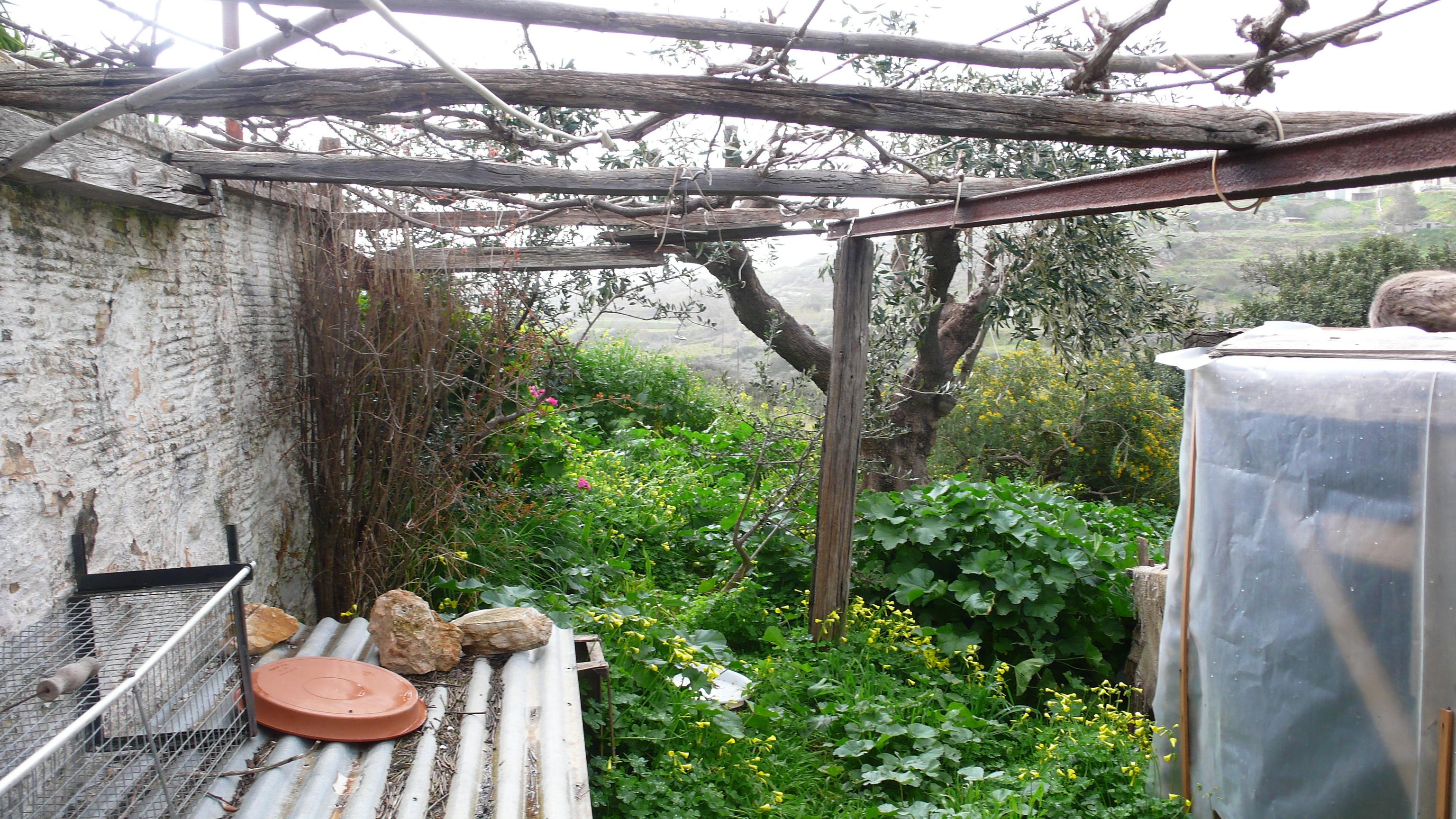 C t sud les abris chats du dehors la petite for t petite et le printemps les chats de syros - Quand tailler la vigne en treille ...
