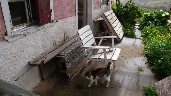 Les croquettes, relativement protégées de la pluie.