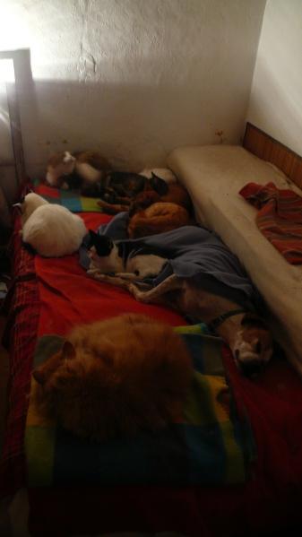 La chatte est en haut de la photo, à droite, perdue parmi les autres chats...