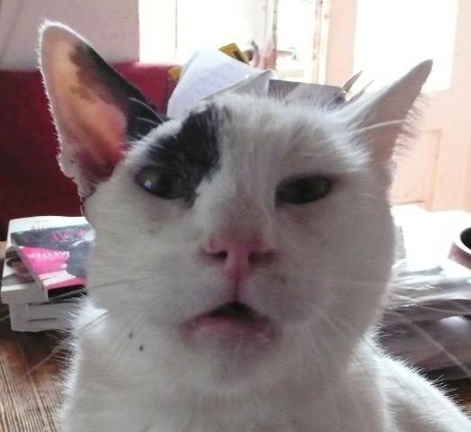 Position typique pour respirer du chat nez bouché.